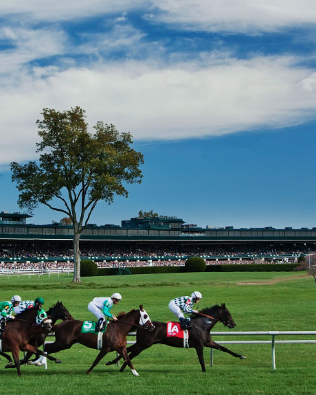 Horse-Capital-Keeneland-Racehorses-Grass