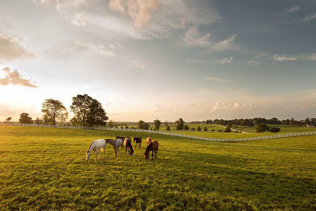 Darby Dan Horse Farm