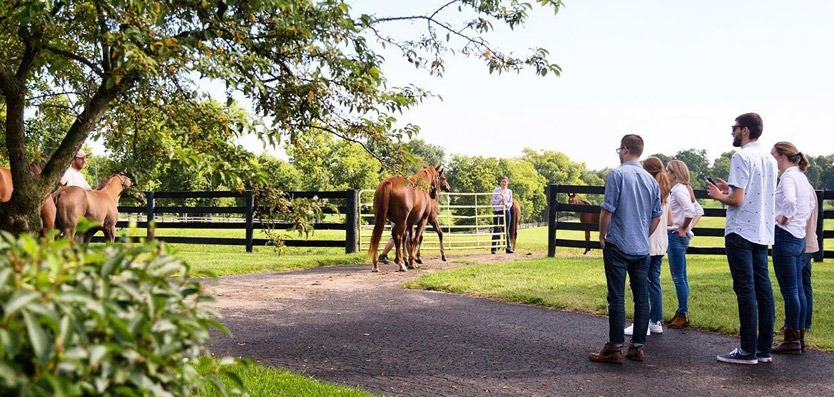 5 People Looking at a Horse walking through a gate